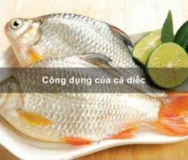 Món ăn bài thuốc từ cá diếc bạn nên biết