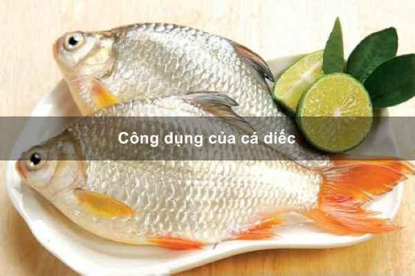 Món ăn bài thuốc từ cá diếc