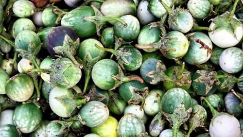 Cà đắng Đắk Lắk món đặc sản của người Ê Đê