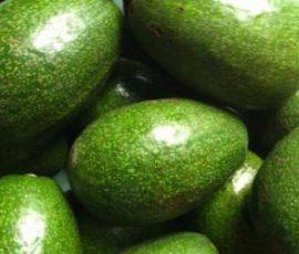Bơ sáp Đắc Lắc đặc sản trái cây nức tiếng gần xa