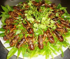 Dế cơm chiên nước mắm - món đặc sản Đồng Nai