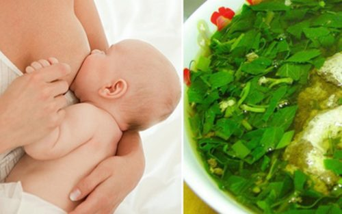 Thực phẩm giúp mẹ có dòng sữa mát lành