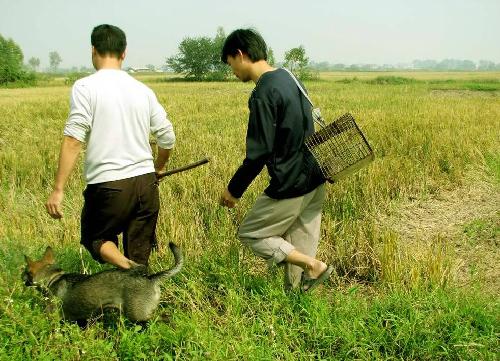 Người vùng Đình Bảng dùng chó để bắt chuột