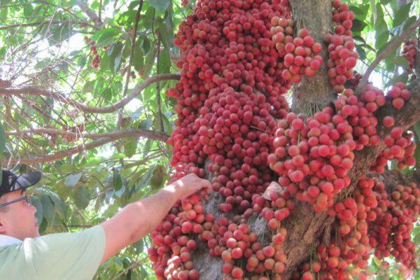 Trái cây Lái Thiêu Bình Dương