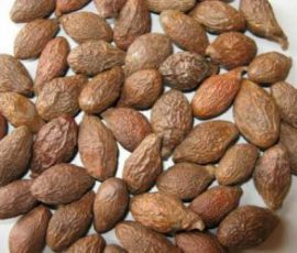 Trái ươi rừng món đặc sản Đồng Nai bổ dưỡng