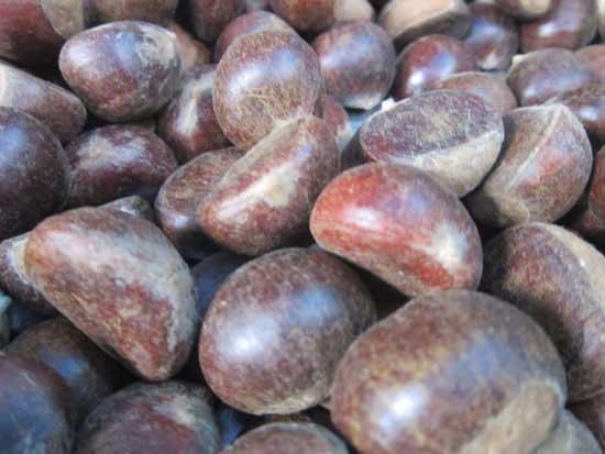 Hạt dẻ Sapa món đặc sản nức tiếng của Lào Cai