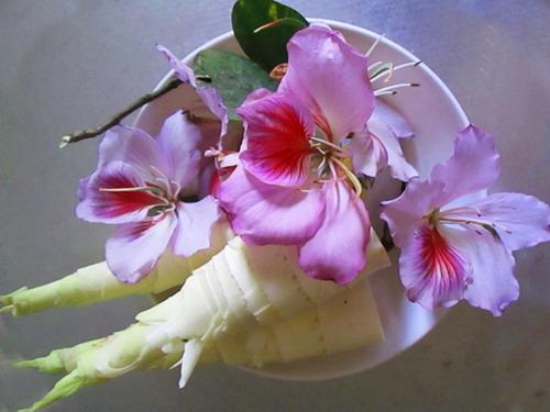 Măng đắng và hoa ban