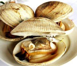 Món ăn từ ngán đặc sản của vùng biển Quảng Ninh