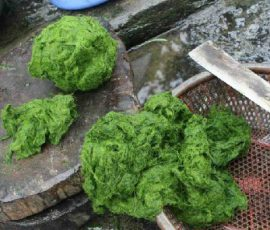Rêu đá Phú Thọ món ăn đặc sản của người Mường