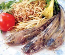 Cá ngát Ngã Bảy - Đặc sản Hậu Giang