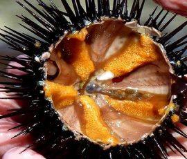 Món ăn ngon của đảo ngọc Nam Du - Kiên Giang