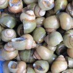 Ốc gạo Tân Phong – Món đặc sản Tiền Giang