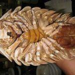 Bọ biển Quy Nhơn món đặc sản không nên bỏ qua