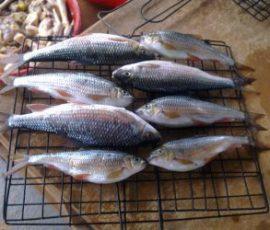 Món cá Niên của người dân Quảng Ngãi