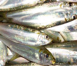Đặc sản cá Phú Quốc bạn nhất định phải thử
