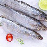 Cá đối Cần Giờ – Món cá ngon bạn không nên bỏ qua
