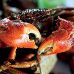 Chù ụ Ba Động – Đặc sản miền duyên hải Trà Vinh