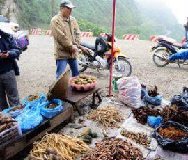 Sản vật quý hiếm ở cao nguyên đá Hà Giang