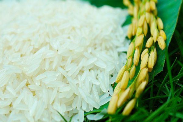 Gạo nàng thơm làng Đào