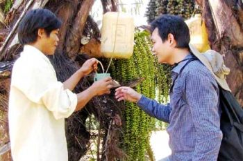Rượu búng báng độc đáo chỉ có ở Quảng Trị