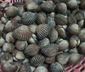 Sò huyết Hà Tiên - Món hải sản bổ dưỡng của Kiên Giang