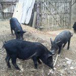 Đặc sản từ thịt lợn ngon bá cháy của Sơn La