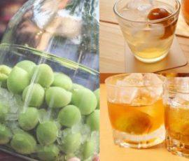 Bí quyết chọn nguyên liệu để ngâm rượu mơ ngon