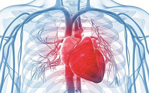 Đậu bắp tốt cho tim mạch