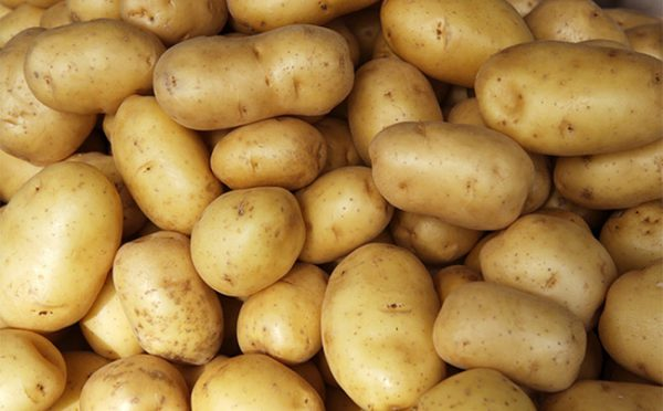 Lưu ý khi chế biến khoai tây bạn nên biết