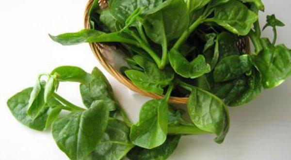 Công dụng của rau mồng tơi giúp điều trị bệnh