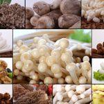 Món ăn từ nấm thêm ngon và lạ miệng