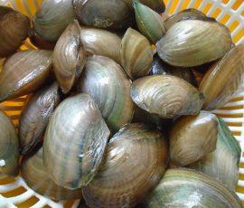 Món ăn từ traimát bổ chữa được nhiều bệnh