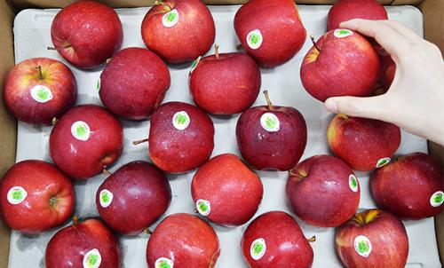 Quả táo bổ dưỡng giàu dinh dưỡng