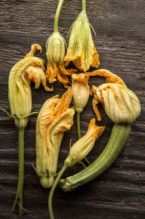 Hoa bí nhồi