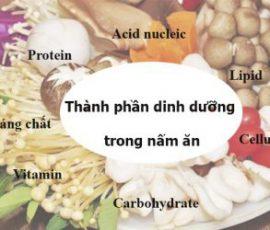 Lợi ích từ nấm cho sức khỏe và phụ nữ mang thai