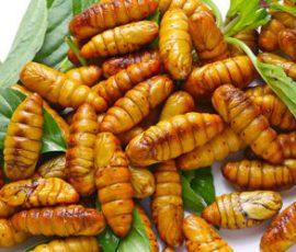 Món ăn ngon từ nhộng tằm ngon bổ dưỡng
